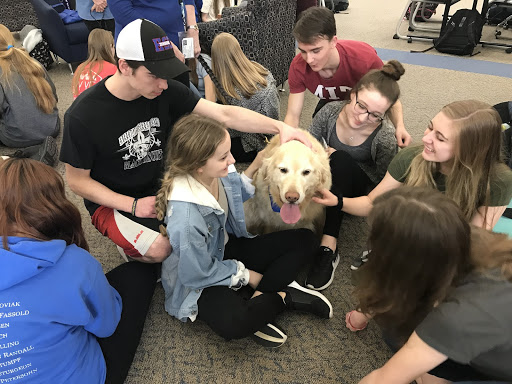 Students play with a golden retriever brought into the library after school on March 13.