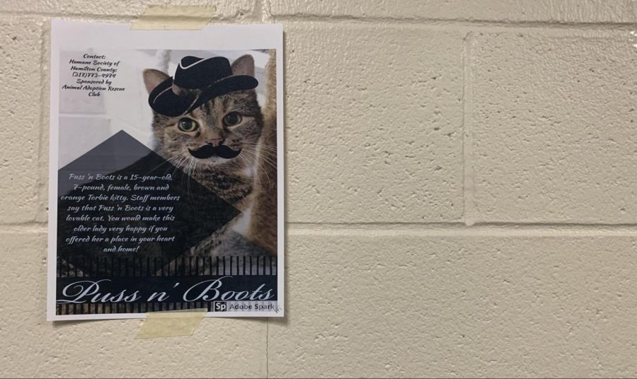 A flyer, made by the AARC, hangs in the downstairs D hallway and depicts a 15-year-old cat in need of being adopted.