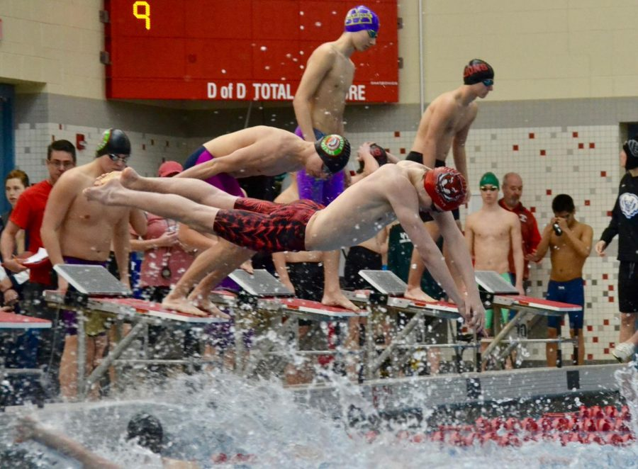 Senior Aaron Frollo dives in off of a relay exchange in the 200 freestyle.
